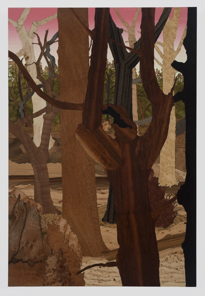 Taylor study for forest 1 2016 jcg9239