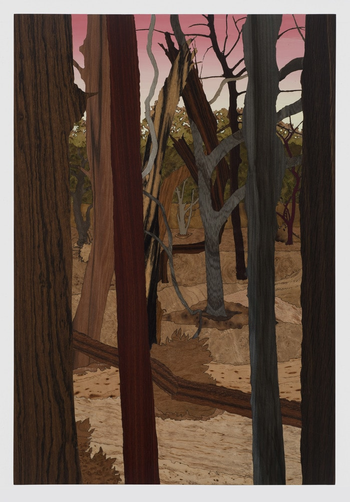 Taylor study for forest 3 2016 jcg9241